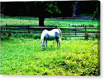 Chestnut Hill Horse Canvas Print by Bill Cannon