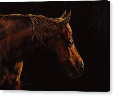 Chestnut Horse Canvas Print - Chestnut Horse Portrait by David Stribbling