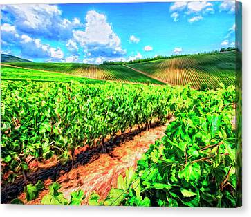 Chianti Vineyard In Tuscany Canvas Print by Dominic Piperata