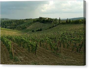 Chianti Vineyards In Tuscany Canvas Print by Todd Gipstein