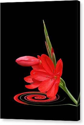 Crimson Lilies Canvas Print - Chic - Ritzy Red Lily by Gill Billington