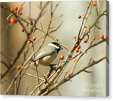 Chickadee 2 Of 2 Canvas Print by Robert Frederick