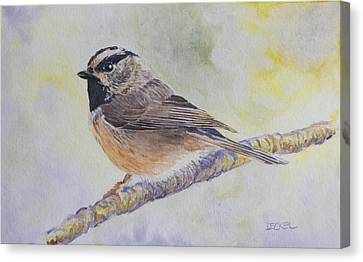Canvas Print featuring the painting Chickadee 2 by Robert Decker