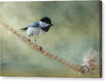 Chickadee At The Shore Canvas Print by Jai Johnson