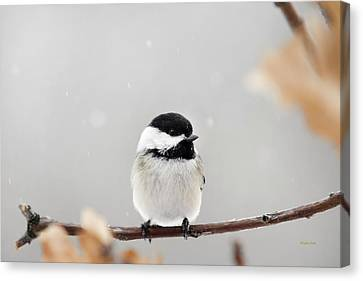 Chickadee Bird In Snow Canvas Print by Christina Rollo