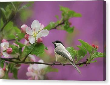 Chickadee In Blossoms Canvas Print