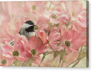 Canvas Print featuring the photograph Chickadee In The Dogwood by Angie Vogel
