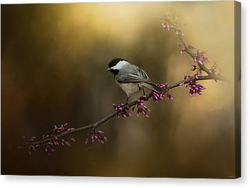 Chickadee In The Golden Light Canvas Print by Jai Johnson