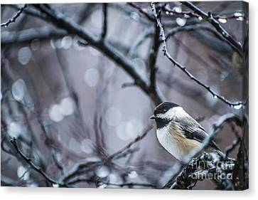 Chickadee Rain Canvas Print