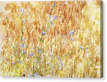 Chickory N Wheat W C Canvas Print by Peter J Sucy