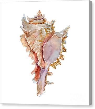 Chicoreus Ramosus Shell Canvas Print