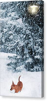 Chihuahua In The Snow - Puppy Winterscape Canvas Print by Rayanda Arts