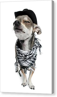 Chihuahua Wearing A Scarf And A Cowboy Hat Canvas Print by Life On White