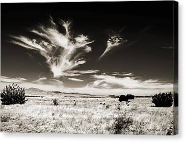 Chihuahuan Desert In Sepia Canvas Print by Allen Sheffield