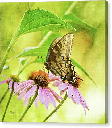 Child Of Sun And Summer Canvas Print by Lois Bryan