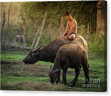 Canvas Print featuring the photograph Child Riding Buffalo In Countryside Thailand. by Tosporn Preede