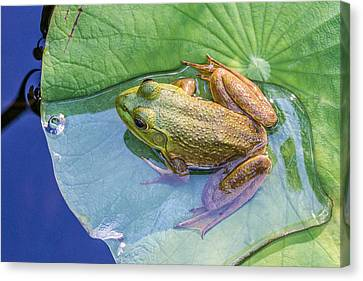 Chillin At The Shallow End Canvas Print