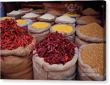 Chilliy Peppers Canvas Print by Mini Arora