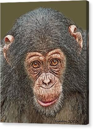 Ape Canvas Print - Chimp Portrait by Larry Linton