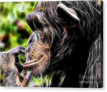 Chimpanzee Collection Canvas Print
