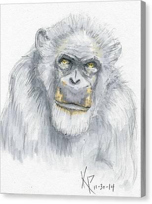 Chimpanzee  Canvas Print by Kurt Prather