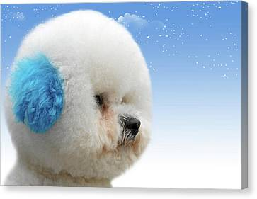 China's Latest Craze - Dyeing Pets Canvas Print