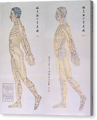Chinese Chart Of Acupuncture Points Canvas Print