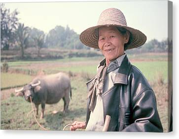 Canvas Print featuring the photograph Chinese Farm Woman Oxen by Douglas Pike