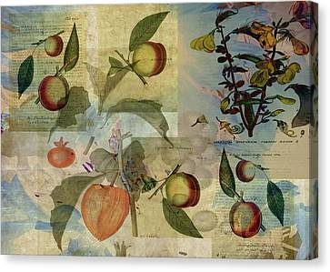 Chinese Lantern Surrounded Canvas Print by Sarah Vernon