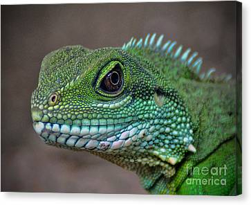 Canvas Print featuring the photograph Chinese Water Dragon by Savannah Gibbs