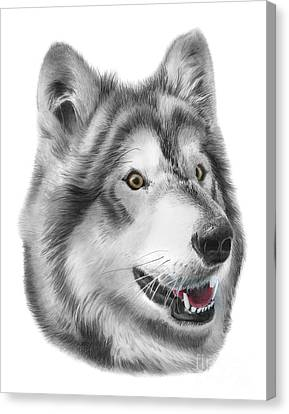 Huskies Canvas Print - Chinook by Peter Piatt