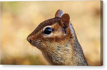 Canvas Print featuring the photograph Chipmunk by Bob Orsillo