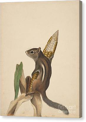 Chipmunk Canvas Print by Celestial Images