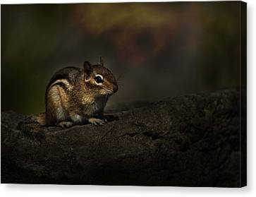 Canvas Print featuring the photograph Chipmunk On Rock by Michael Cummings