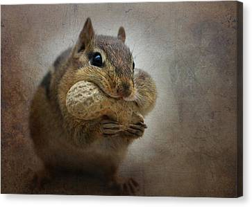 Chipster Canvas Print by Lori Deiter