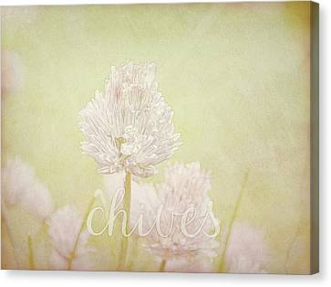 Canvas Print - Chives by Ann Powell