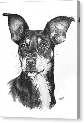 Chiweenie Canvas Print by Barbara Keith