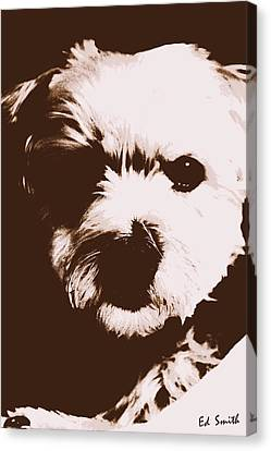 Chocolate Charlie Canvas Print by Ed Smith