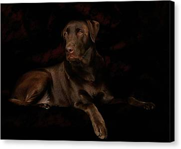 Chocolate Lab Dog Canvas Print by Christine Till