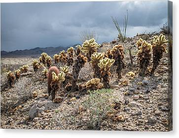 Cholla Family With Guests Canvas Print
