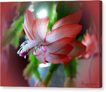 Christmas Cactus Canvas Print by EricaMaxine  Price