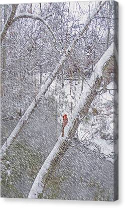 Christmas Card - Cardinal In Tree Canvas Print by Larry Bishop