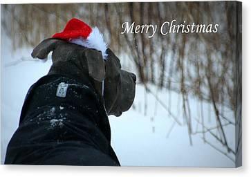 Christmas Card Pit Bull  Canvas Print