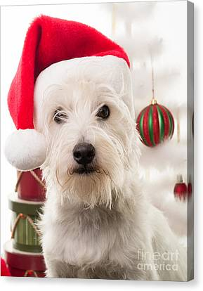 Christmas Elf Dog Canvas Print by Edward Fielding