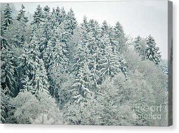Canvas Print featuring the photograph Christmas Forest - Winter In Switzerland by Susanne Van Hulst