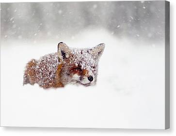 Christmas Fox Canvas Print by Roeselien Raimond