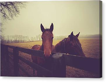 Canvas Print featuring the photograph Christmas Horses by Shane Holsclaw