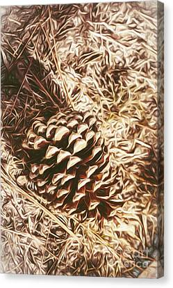 Pine Cones Canvas Print - Christmas Pinecone On Barn Floor by Jorgo Photography - Wall Art Gallery