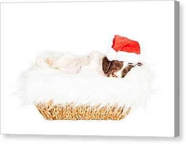 Christmas Puppy Sleeping In Basket Canvas Print by Susan Schmitz