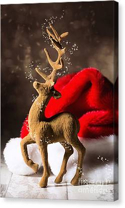 Christmas Reindeer Canvas Print by Amanda Elwell